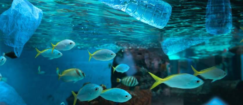 l'inquianamento marino è una grossa problematica